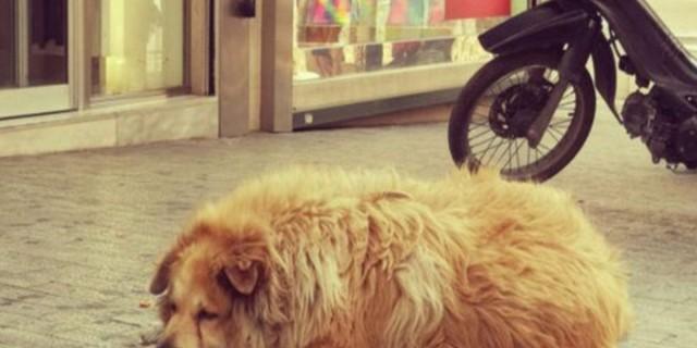 Οδηγός παρέσυρε και σκότωσε έναν από τους πιο γνωστούς αδέσποτους σκύλους της Αθήνας!