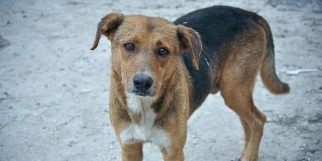 Κτηνωδία στο Κιλκίς: Κτηνοτρόφος εκτέλεσε σκύλο με καραμπίνα