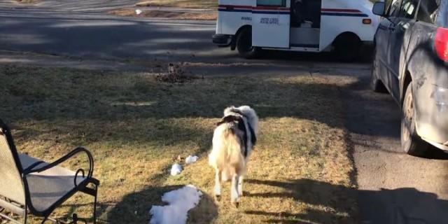 Αυτός ο σκύλος είναι αρκετά ενθουσιασμένος - Ο λόγος που γίνεται αυτό θα σας κάνει να απορήσετε (video)