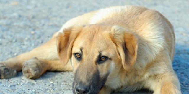 Φρίκη στη Ρόδο: Κρέμασαν το σκυλί τους στο χωράφι!