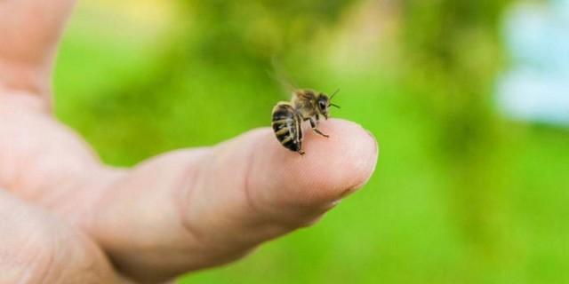 Μέλισσα - Σφήκα: Τι πρέπει να κάνουμε άμεσα όταν μας τσιμπήσουν