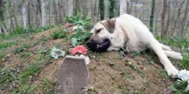 Θα σας ραγίσει την καρδιά: Σκύλος επισκέπτεται κάθε μέρα τον τάφο του αφεντικού του, 2 χρόνια μετά το θάνατό του
