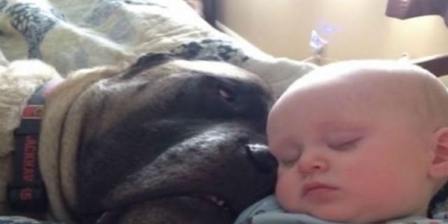 Σκύλος και μωρό κοιμούνται μαζί, όμως ένα πρωί η συμπεριφορά τους ήταν παράξενη - Σοκάρει το υλικό από την κάμερα...