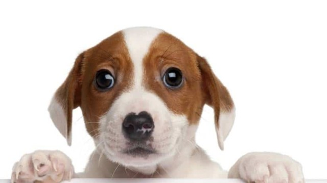 Λιώνεις όταν σε κοιτάει ο σκύλος σου; Σίγουρα το λόγο δεν το έχεις σκεφτεί ποτέ!