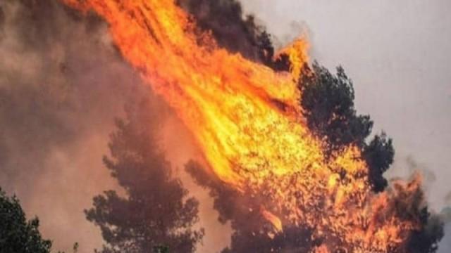 Ισχυρή πυρκαγιά στον Κιθαιρώνα!