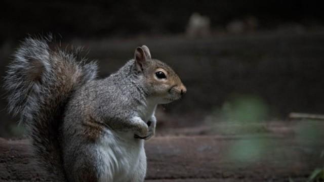 Σκίουρος έκλεβε κάθε μέρα την τροφή των πουλιών...Ο τρόπος που τον σταμάτησαν είναι ξεκαρδιστικός!