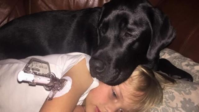 Ο σκύλος της ήταν ανήσυχος στην μέση της νύχτας. Όταν έτρεξε στον γιο της, δεν πίστευε στα μάτια της!