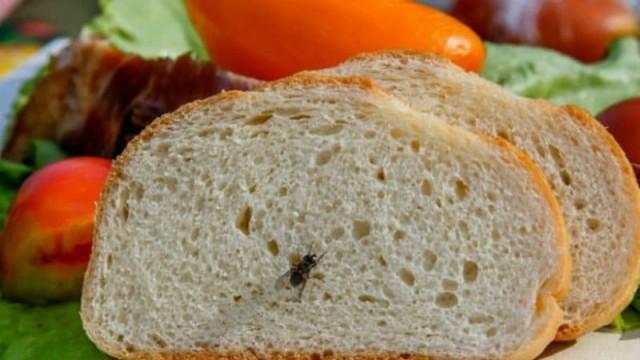 Πώς θα διώξετε εύκολα και αποτελεσματικά τις μύγες από το σπίτι σας!