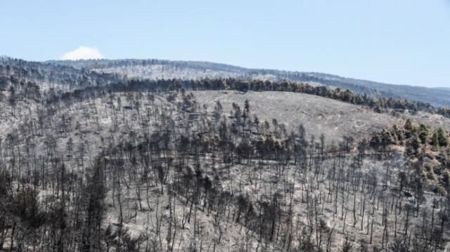 Φωτιά στην Εύβοια: Κάηκαν 23.565 στρέμματα γης!