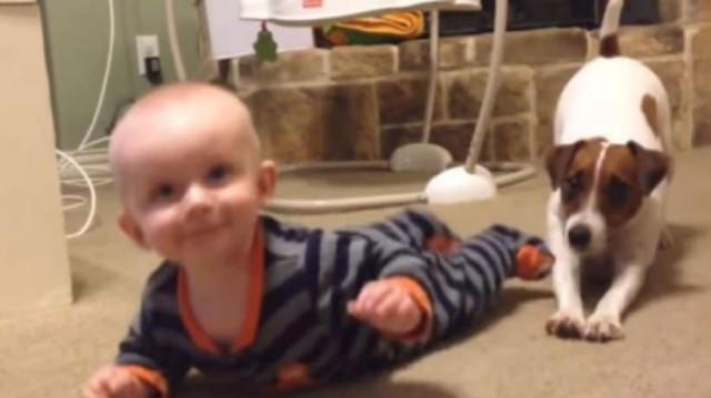 Εκπληκτικό: Σκυλάκι μαθαίνει σε μωρό να μπουσουλάει!