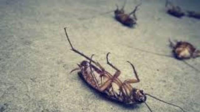 5+1 tips για να απαλλαγείτε μια για πάντα από τις κατσαρίδες και τα ζωύφια!