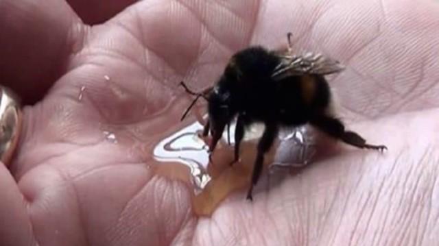 Βρήκε μία παγιδευμένη μέλισσα και την έσωσε! Μόλις δείτε τι έκανε για τον ευχαριστήσει, δεν θα το πιστεύετε!