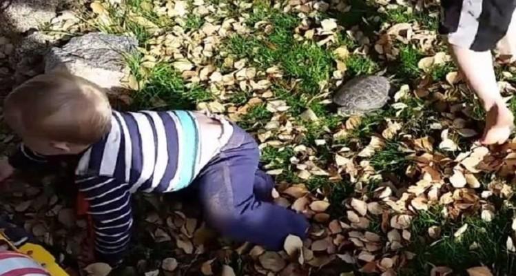 Απίστευτο βίντεο: Χελώνα… πήρε στο κυνήγι ένα αγοράκι!