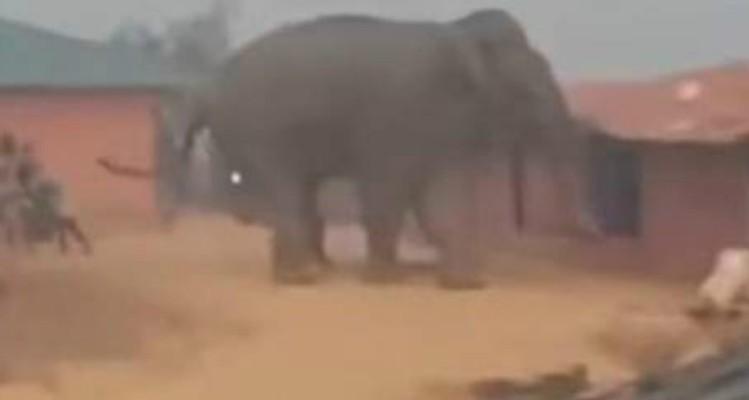 Σοκαριστικό βίντεο: Εξαγριωμένος ελέφαντας ποδοπάτησε δύο πρόσφυγες στο Μπανγκλαντές!