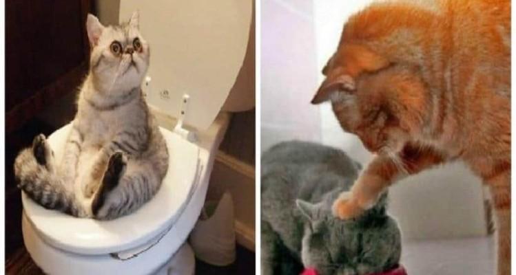20 στιγμές που οι γάτες μας χάρισαν απίστευτο γέλιο! (Video)