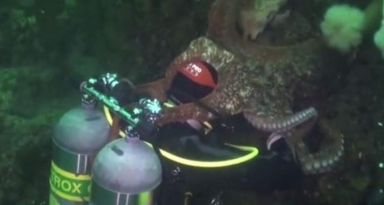 Γιγαντιαίο χταπόδι καταπίνει δύτη! (Βίντεο)