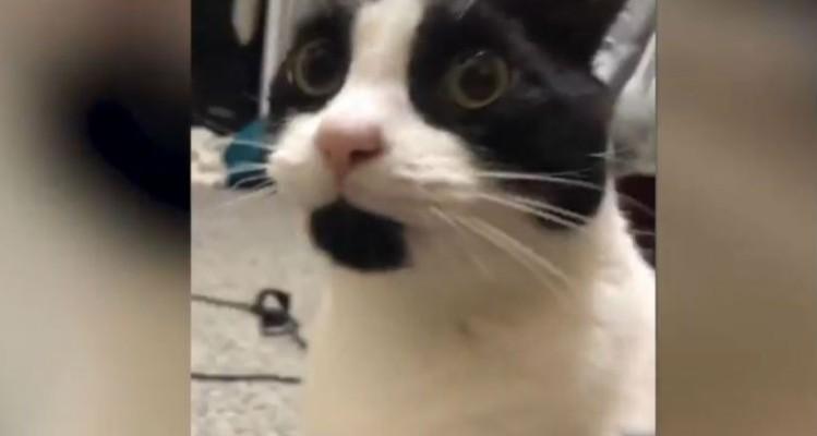 Όλοι νομίζουν ότι είναι μια απλή γάτα. Όταν δουν τι κάνει μένουν... άφωνοι!
