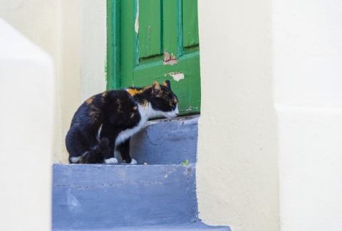 Πλάκα: 18 πράγματα που σίγουρα δεν γνώριζες για την πιο όμορφη γειτονιά της Αθήνας! (Photos)