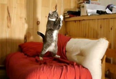d9322647c3e4 Οι σκανταλιές μιας γάτας σε slow motion!(VIDEO) - Περίεργα-Funny ...