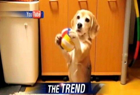 ΑΥΤΗ ΕΙΝΑΙ ΑΛΗΘΙΝΗ ΑΓΑΠΗ! Δείτε το ΣΥΓΚΛΟΝΙΣΤΙΚΟ βίντεο με την υποδοχή που επιφυλάσσει ένας σκύλος στο ΑΦΕΝΤΙΚΟ του!!!
