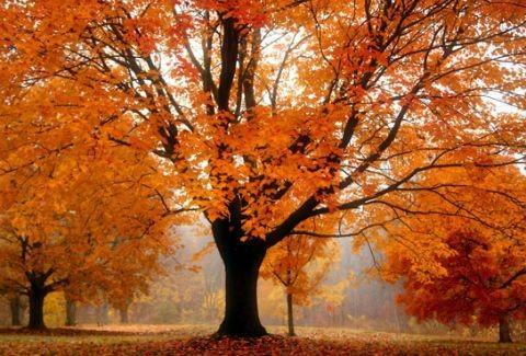 H ΔΥΝΑΜΗ του ΠΟΡΤΟΚΑΛΙ χρώματος στη φύση! (ΜΑΓΕΥΤΙΚΕΣ ΕΙΚΟΝΕΣ)