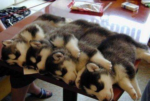 ΑΠΙΣΤΕΥΤΑ ΧΑΡΙΤΩΜΕΝΑ! Δείτε πώς κοιμούνται τα πιο ΧΑΡΙΤΩΜΕΝΑ ΖΩΑΚΙΑ!!! (PHOTOS)