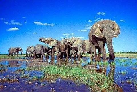 Η μαγεία της Αφρικής... - Πού θα βρείτε τα πιο ΕΝΤΥΠΩΣΙΑΚΑ Πάρκα Άγριας Ζωής;;; (PHOTOS)