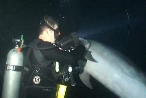 ΣΥΓΚΛΟΝΙΣΤΙΚΟ!!! ΤΡΑΥΜΑΤΙΣΜΕΝΟ δελφίνι ζητάει τη βοήθεια δύτη και....