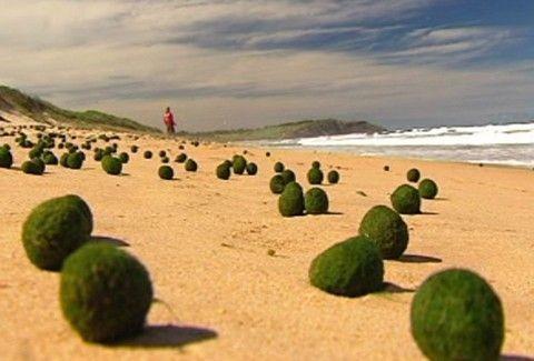 Η πιο... εξωγήινη παραλία του πλανήτη; Δείτε τί συμβαίνει σε ακτή του Σίδνεϊ! (PHOTO)