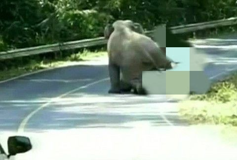 ελέφαντας σεξ βίντεο