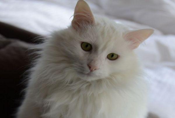 Αυτή η γάτα ήπιε 3 μπουκάλια κρασί. Δείτε τί της συνέβη!