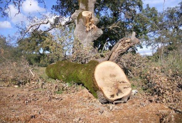 Τραγωδία στη Φωκίδα! Κορμός δέντρου καταπλάκωσε 23χρονο - Ειδήσεις ...
