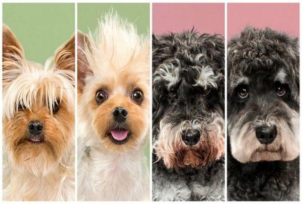 Θα τα λατρέψεις: Σκυλάκια σε υπέροχες φωτογραφίες πριν και μετά το κούρεμα!