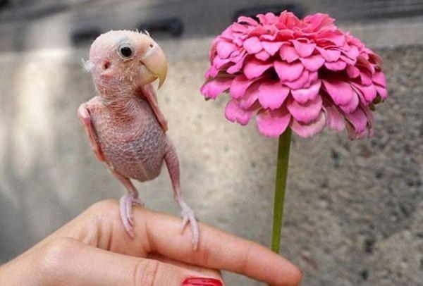 Μεγάλο βυζί Κολομβιανή γυναίκες αγαπούν το πουλί
