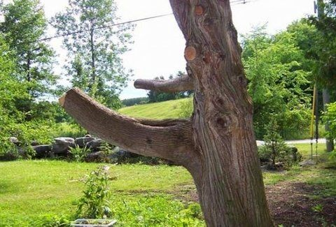 Βλέπετε αυτό το αδιάφορο κομμάτι δέντρου; Όταν δείτε πώς έγινε θα τρελαθείτε! (Photos)