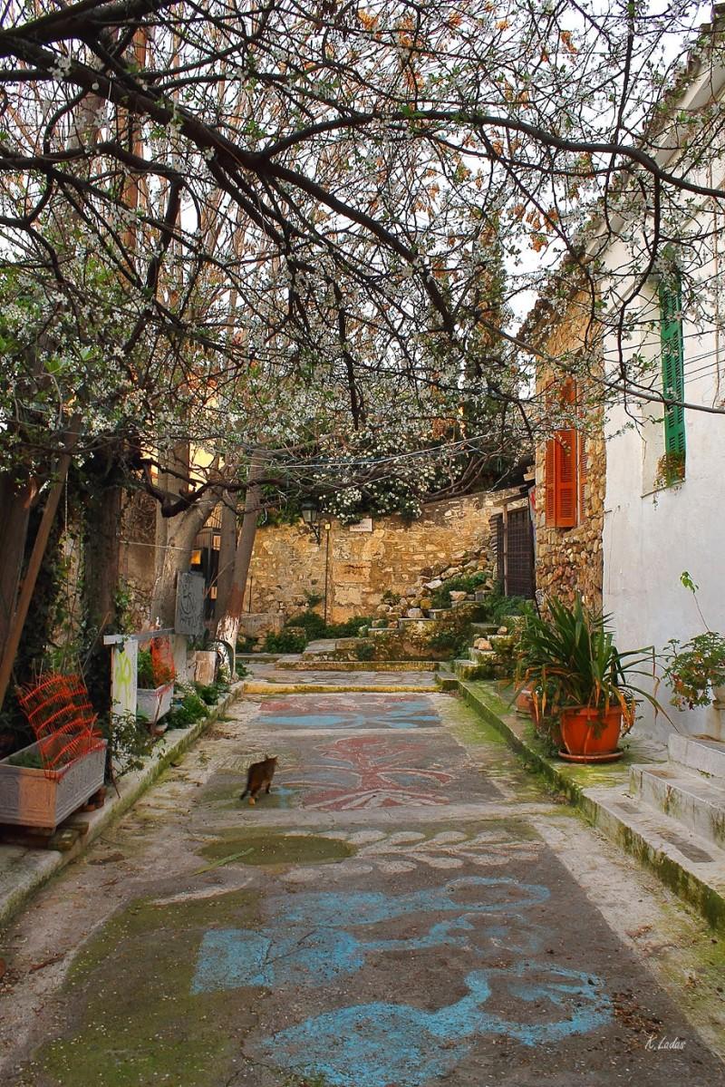 Αναφιώτικα: Το «νησί» της Αθήνας στην Πλάκα με χρώματα που θυμίζουν πίνακα ζωγραφικής! (photos, video)