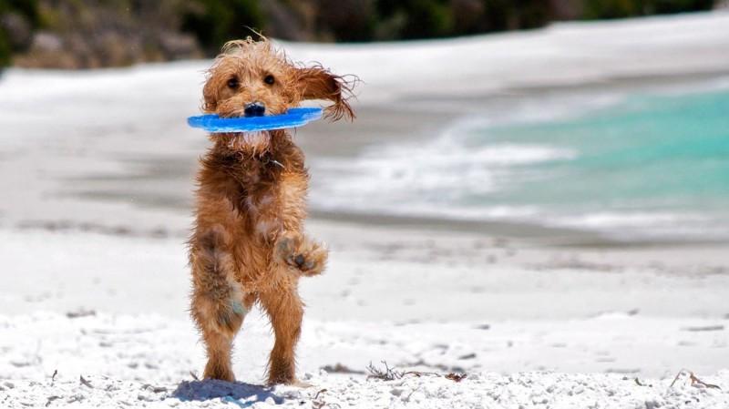 Πάρτε τις... παραλίες: