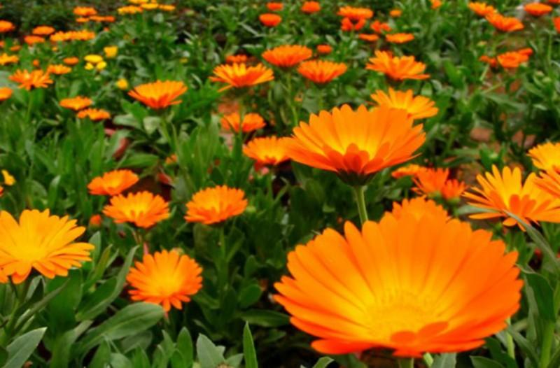 Δείτε ποιο λουλούδιαντιστοιχεί στον μήνα γέννησης σας και τι συμβολίζει!