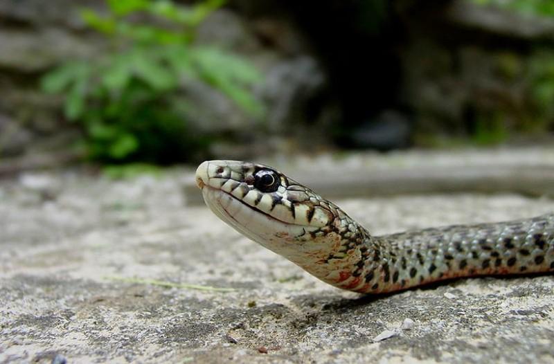 Σοκ: Ποια μεγάλη πόλη της χώρας έχει γεμίσει με φίδια! Τρόμος στους κατοίκους