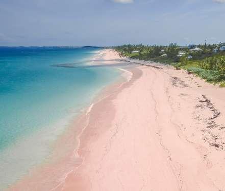 f95a2786b8 Το ροζ χρώμα της άμμου προέρχεται από μικροσκοπικά κοχύλια τα οποία  λέγονται foraminifera