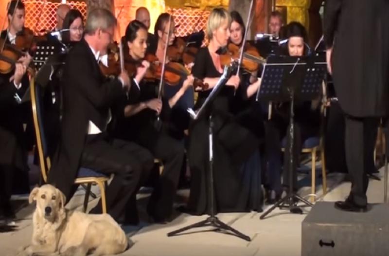 Θα λιώσετε! Σκύλος «έκλεψε» την παράσταση από ορχήστρα στην Τουρκία (video)