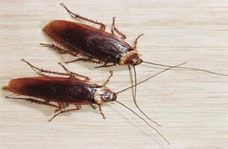 Πριν τις κυνηγήσεις δες 14 πράγματα για τις κατσαρίδες που σίγουρα δεν γνώριζες!