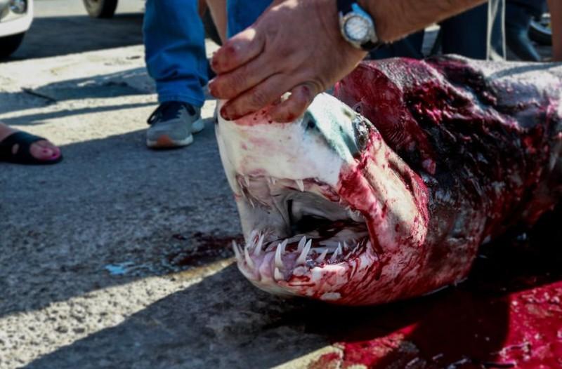 Στα σαγόνια του καρχαρία: Η ψαριά από την Λέσβο που έχει τρομοκρατήσει το διαδίκτυο! (photos)