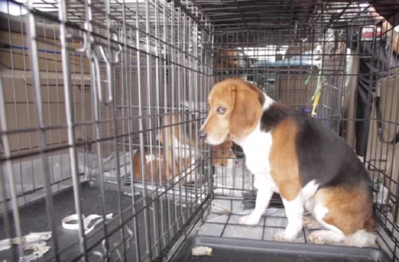 Βίντεο που ραγίζει καρδιές! Σκυλιά - πειραματόζωα βλέπουν για πρώτη φορά το φως του ηλίου!