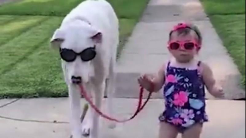 Ένας σκύλος χωρίς ακοή είναι ο φύλακας άγγελος ενός μικρού κοριτσιού: Το πιο γλυκό video που θα δείτε σήμερα!