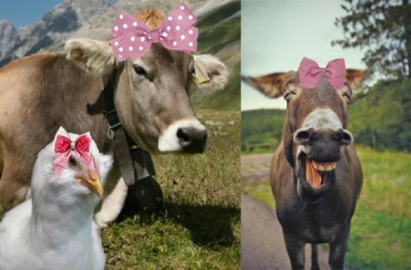 Σοκ και αποτροπιασμός: Στη Γερμανία ανοίγουν οίκους ανοχής για κτηνοβάτες!