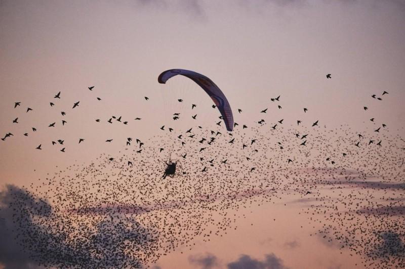 Πραγματικά μεγάλο πουλί φωτογραφίες