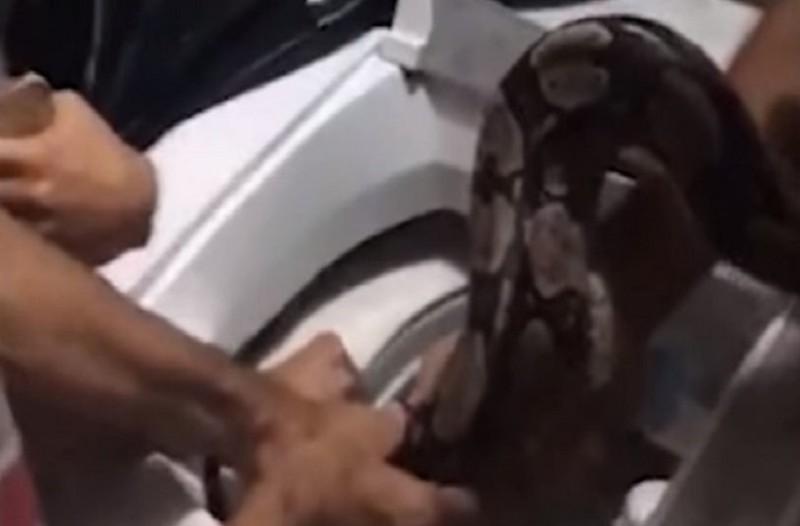 Τρομακτικό: Οικογένεια βρήκε μέσα στο πλυντήριο ένα τεράστιο... φίδι! (Video)