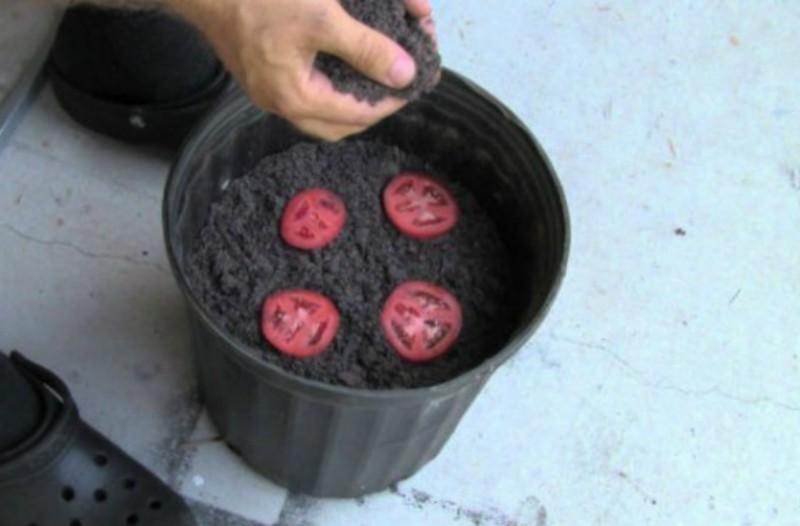 Ο καλύτερος και ευκολότερος τρόπος για να καλλιεργήσεις ντομάτες σπίτι σου! (video)