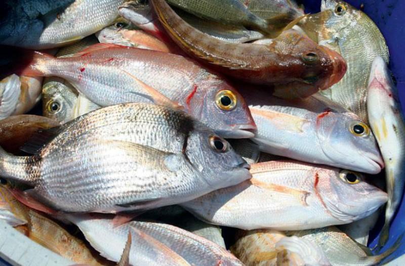 Προσοχή! Δεν είναι όλα ίδια...  Αυτά τα 9 ψάρια είναι επικίνδυνα για την υγεία!